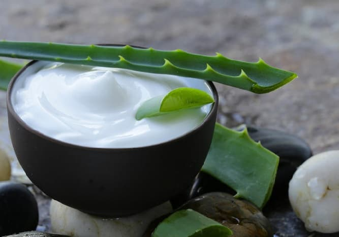 aloe vera for bald head men